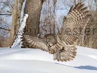 owl-9089