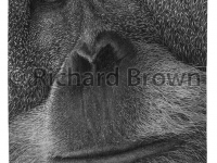 brown_richard_lucy